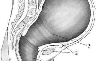 Изменения в шейке матки в период родов