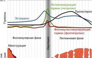 Причины короткого менструального цикла