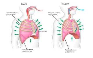 Причины и лечение одышки во время беременности